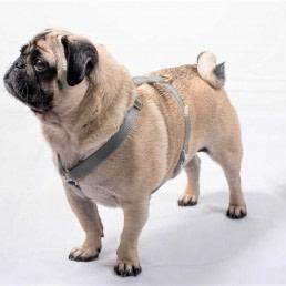 grey bespoke dog harness