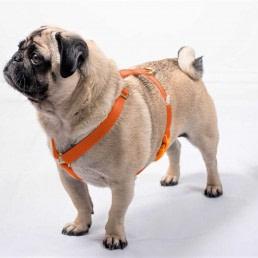 doggie apparel single webbing harness